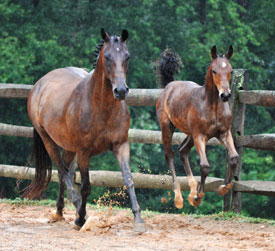 From Pregnancy to Yearling