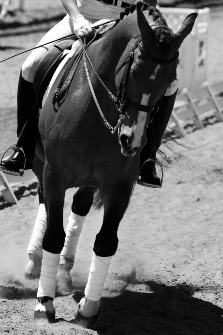 16lbs of Grain And Still Losing Weight - Summit Equine Nutrition