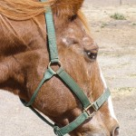 Some Special Considerations For Getting Your Older Horse Through The Winter
